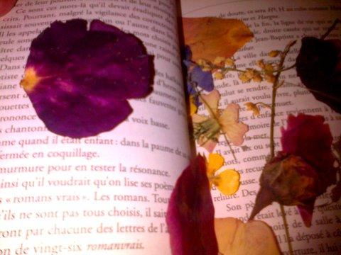 fleurs séchées ds livres1