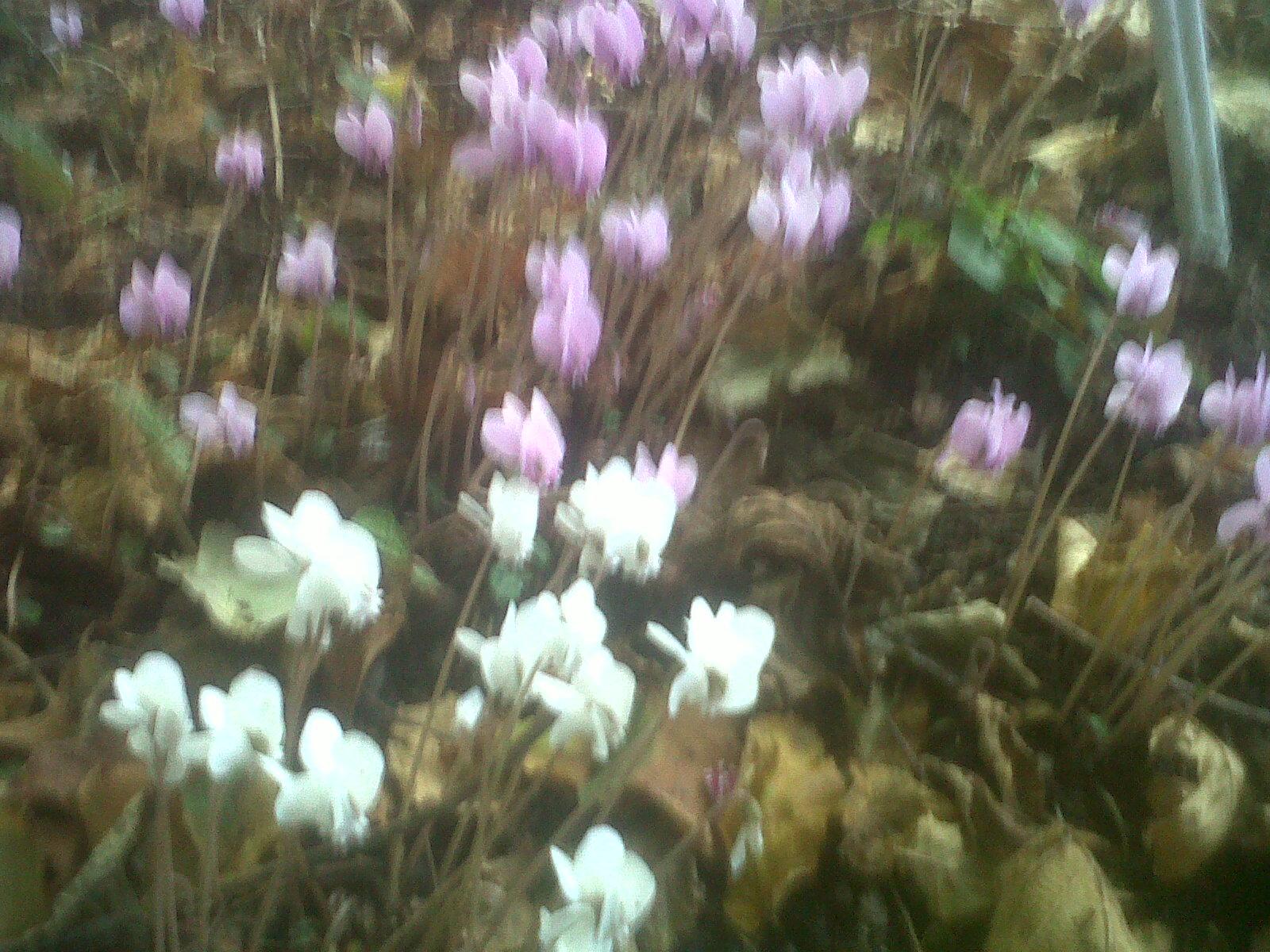 Les feuilles mortes d yves montand et l automne dans mon for Le jardin yves montand