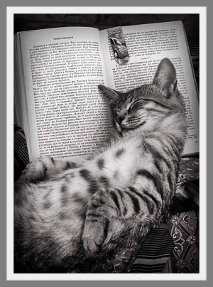 chat qui lit lylouanne blog