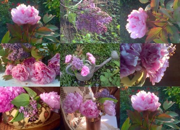 2013-04-28 fin avril, pivoines, pommier, fleurs2