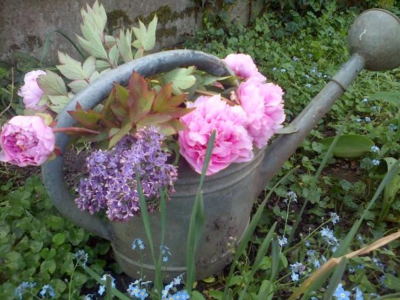 arrosoir avec pivoines &lilas