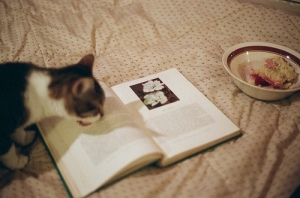 chat mange mots ilovereadingandwriting tumblr