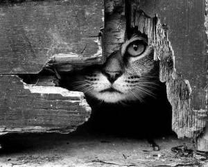 chat noir&blanc oeil lylouanne tumblr