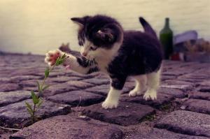 chaton lylouanne tumblr