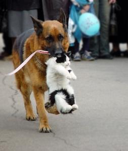 chien qui ramène chat lylouanne