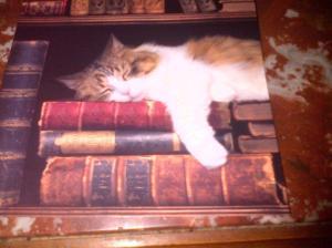 swapounet carte chat livres