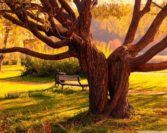 Pas tout jeune cet arbre !
