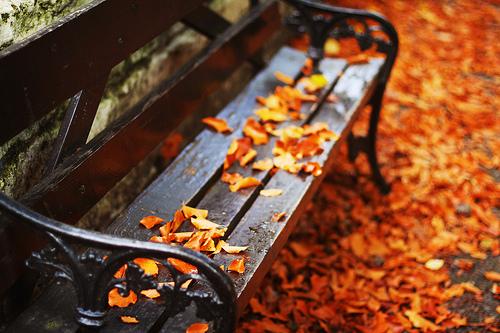 automne, banc wanderlustywriter