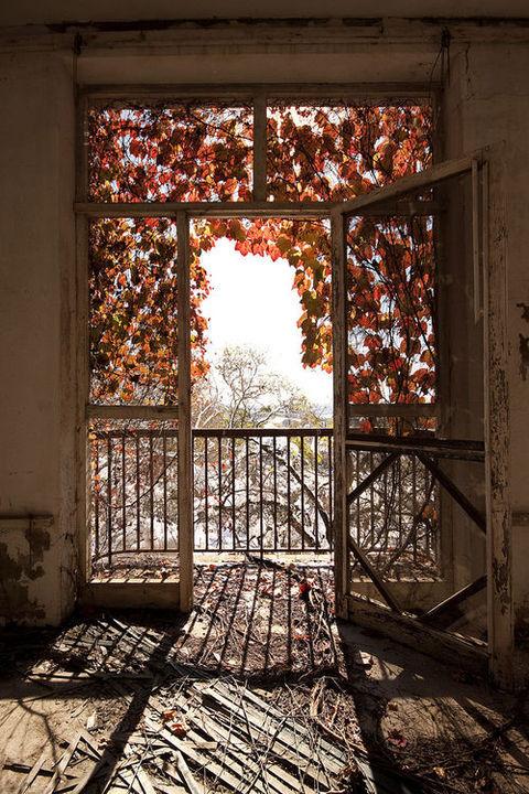 automne fenetre feuilles vanishingintoclouds