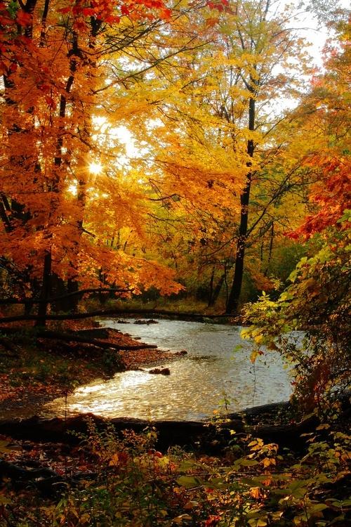 automne rivière vanishingintoclouds