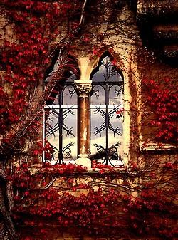 L'automne pour ma balade du mercredi... (3/6)