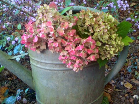 Je recycle l'arrosoir et en ce moment il croule sous les hortensias qui sèchent...
