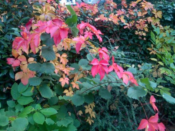Une arche tricolore d'un jardin voisin, abandonné, hélas...