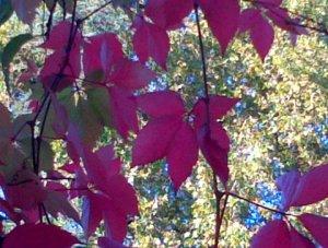 coulée rouge dans la verdure, le 19 octobre 2013