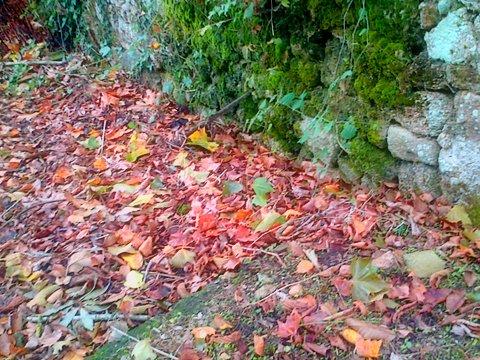 feuillesmortes en pluie