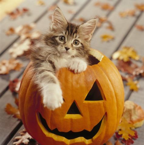 chat Haloween Lylouanne tumblr