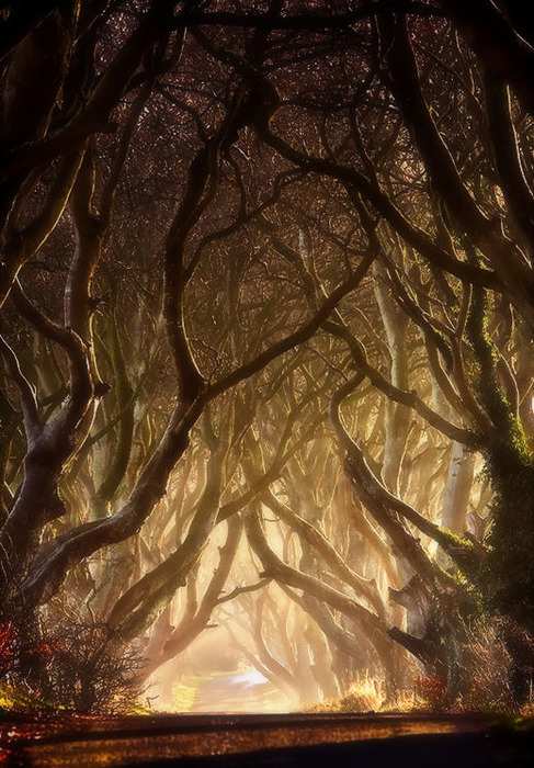 halloween arbres bouh velvetinabat