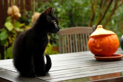 halloween chat noir dubitatif citrouille lylouanne tumb