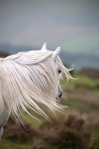 cheval blanc devant lande et mer infinite-paradox