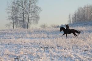cheval noir dans neige nature-and-culture