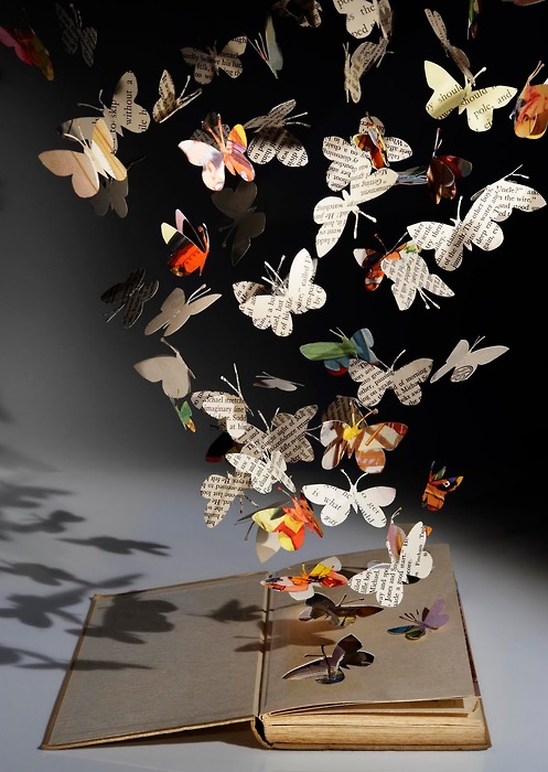 livres mots papillons lylouanne tumblr