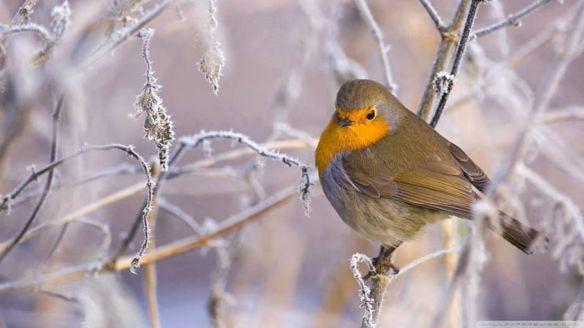rouge gorge dans la neige beauty perfection of life sur fb