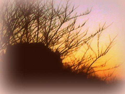 aube mars 7h 14.03.14(2)