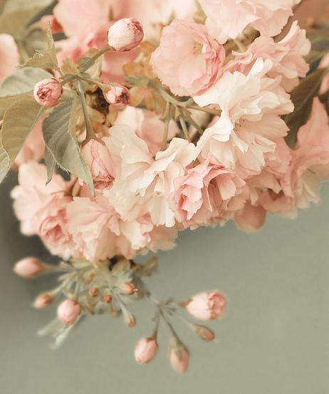 bouquet rose en l'air ana-rosa