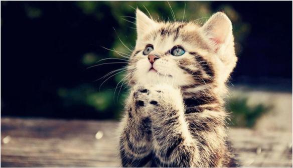 chaton en prières lylouanne