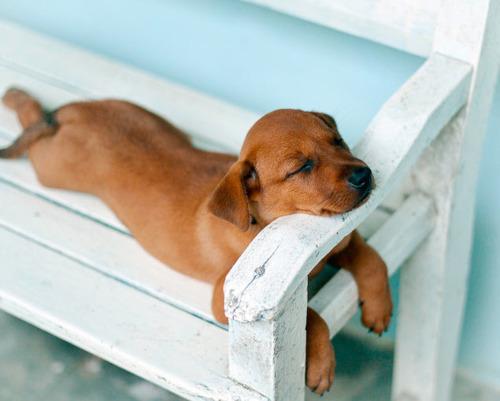 chien au repos ibseni tumblr