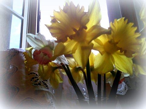 jonk bouquet devant fenêtre