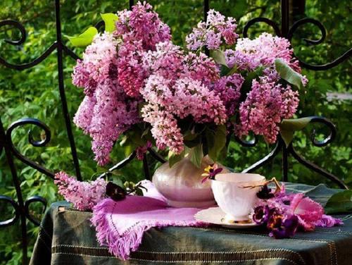 lilas mauve tinkerbell2477