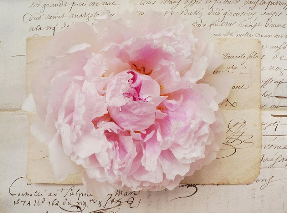 pivoine manuscrit umla
