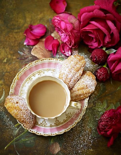 rose thé au lait vieilles roses fatinia tumb
