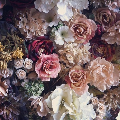 roses passées ana-rosa