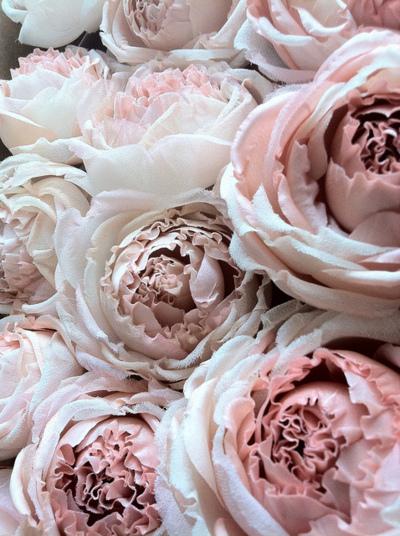 roses pivoines passées livvysmomsvintageworld