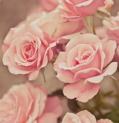 roses roses umla tumb