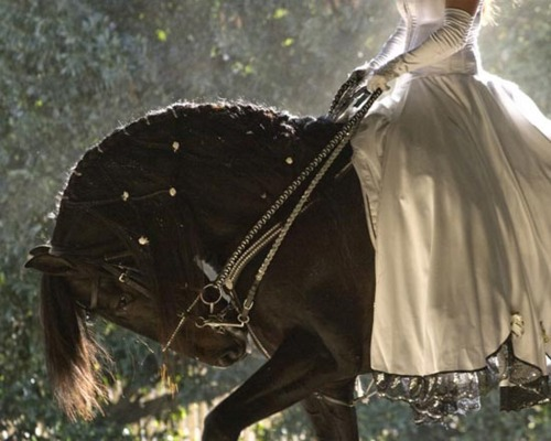 cheval noir et mariée nature-and-culture