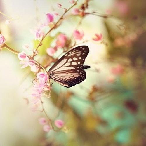 papillon butineur fillingthesoulwithbeauty