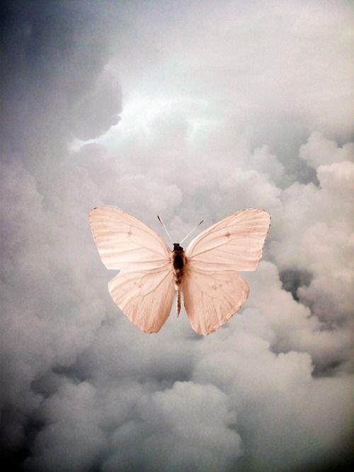 Le papillon rose !