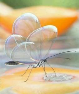 Papillons espejitos ou petits miroirs sur FB Green Renaissance