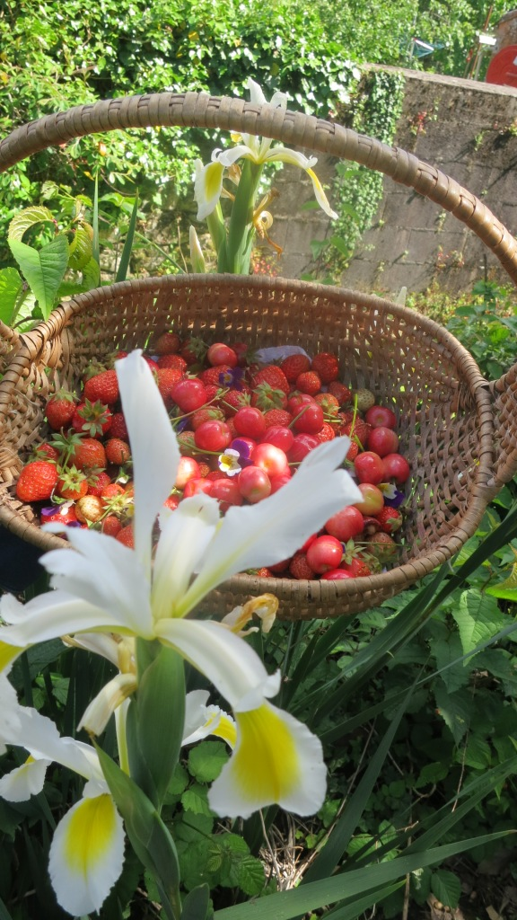 Avec les fraises et derrière un lys qui a poussé tout seul, on a immortalisé le petit panier...
