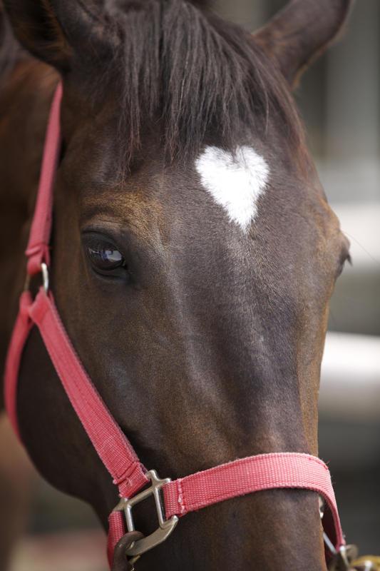 coeur de cheval pour Val