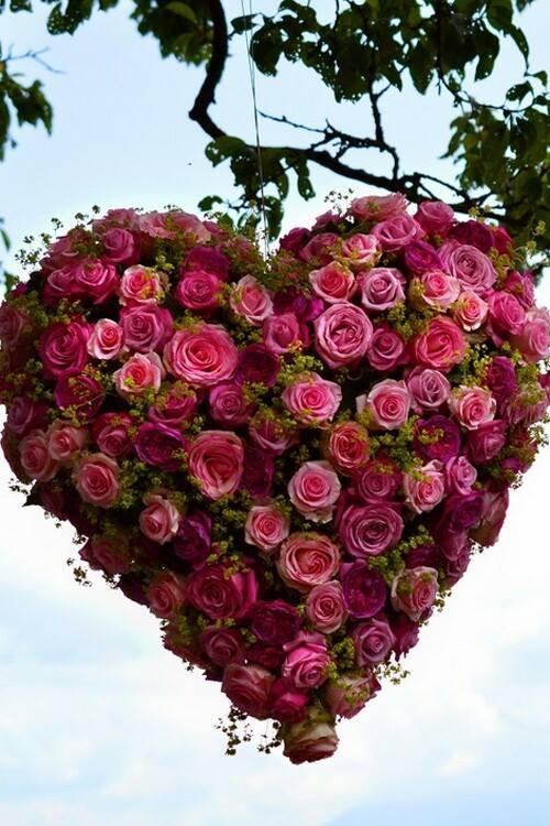 coeur de roses roses tersessenta
