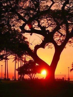 coeur de soleil couchant in trees