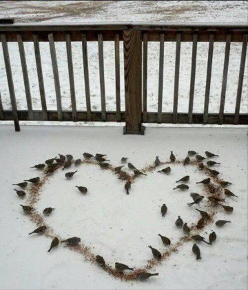 coeur d'oiseaux Simple life FB