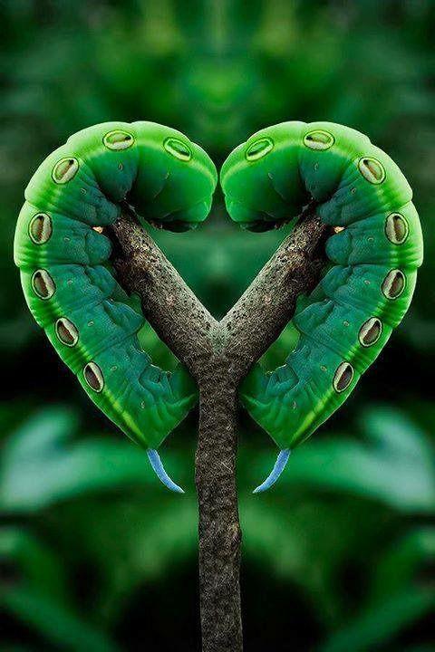 coeur insecte et végétal pinterest