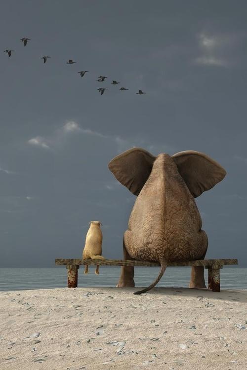 différence chien & éléphant i,finite paradox