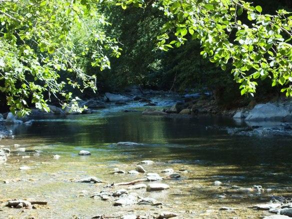 rivière ombragée