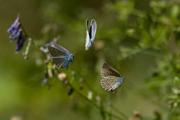 chopin papillons que rien ne traversen image Gougl